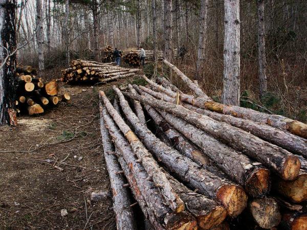 Acțiune de AMPLOARE în rândul firmelor care exploatează lemnul. S-au dat amenzi de 25.000 de lei