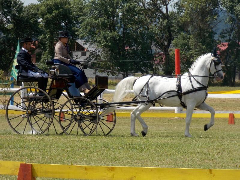 Campionatul Naţional de Atelaje cu doi cai, desfășurat în acest weekend la Herghelia Beclean