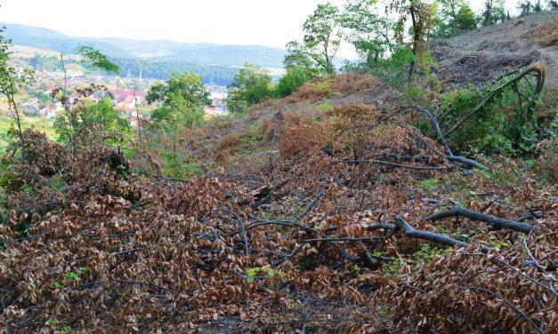 Punctul de vedere al ROMSILVA privitor la tăierile de pădure care au provocat un val de reacții negative în rândul comunității din Beclean – FOTO